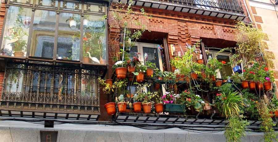 balcones con plantas en malasaña
