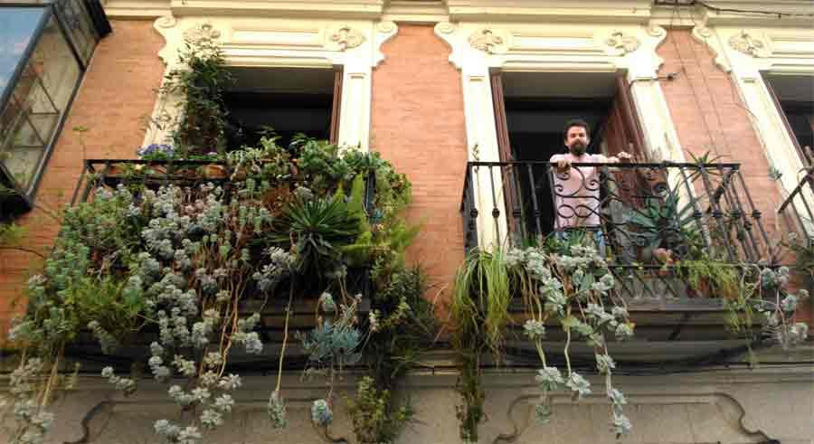 balcón con plantas de Malasaña