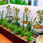 Cómo crear tu propio huerto en el balcón, paso a paso