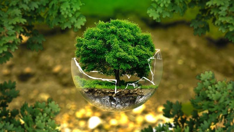 Árbol dentro de una bola de cristal rota en un campo con más plantas