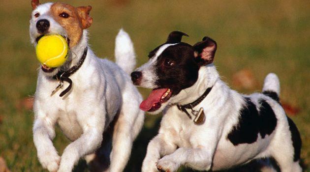 ¿Qué parques para perros hay en Madrid?