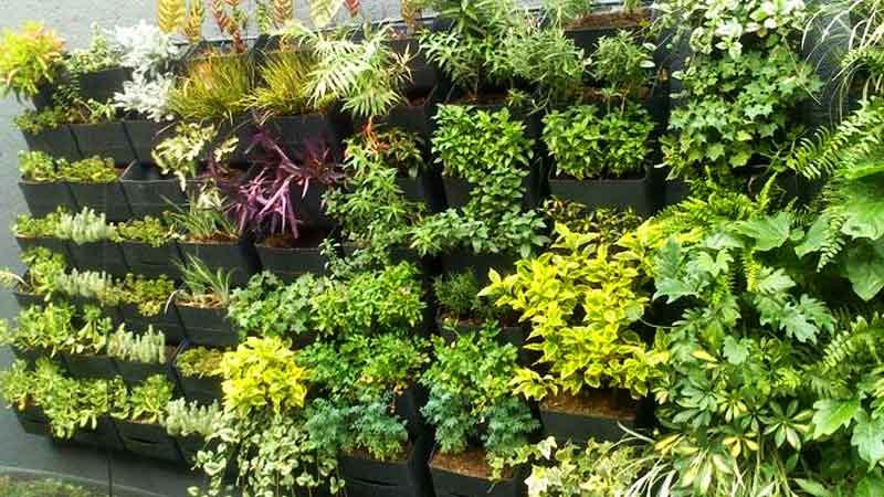 huerto vertical con diferentes tipos de plantas