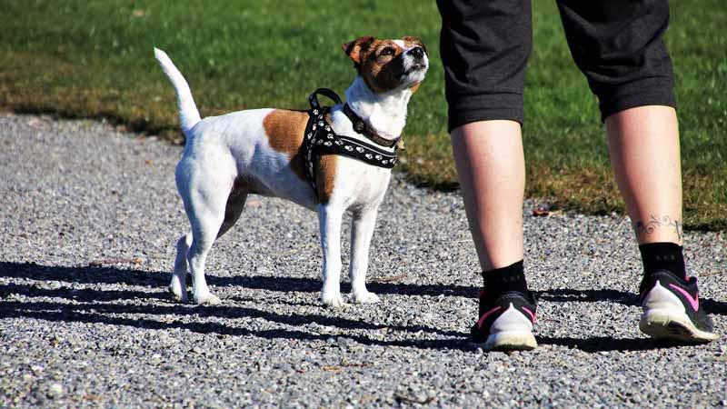 Dueño y perro en un parque preparados para hacer ejercicio