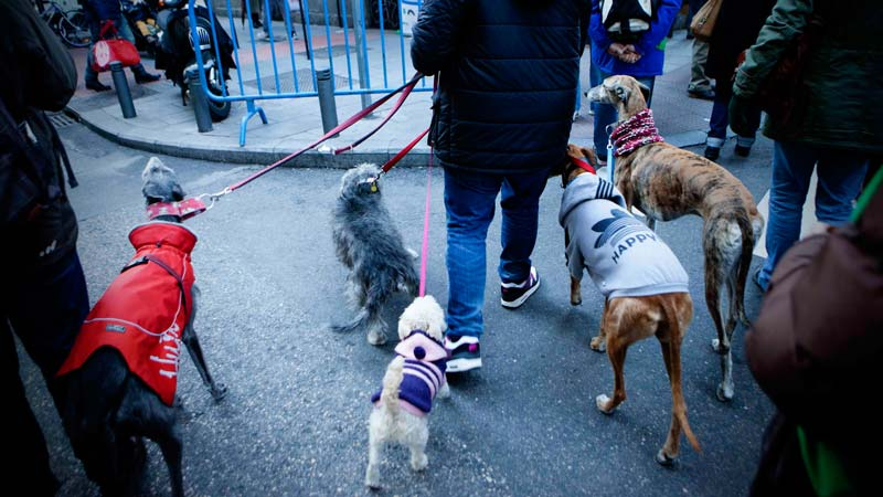 Perros junto a su dueños preparados para la Vuelta de San Antón. Madrid